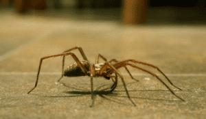 Como se livrar das aranhas RJ insectcontrol rio de janeiro