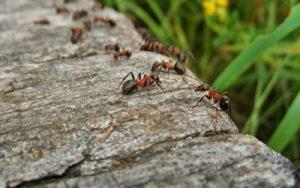 8 dicas para manter as formigas fora de casa RJ InsectControl