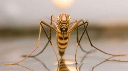 tudo sobre mosquitos da dengue e pernilongos