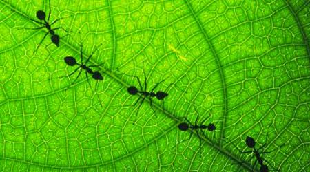 comunicação formigas